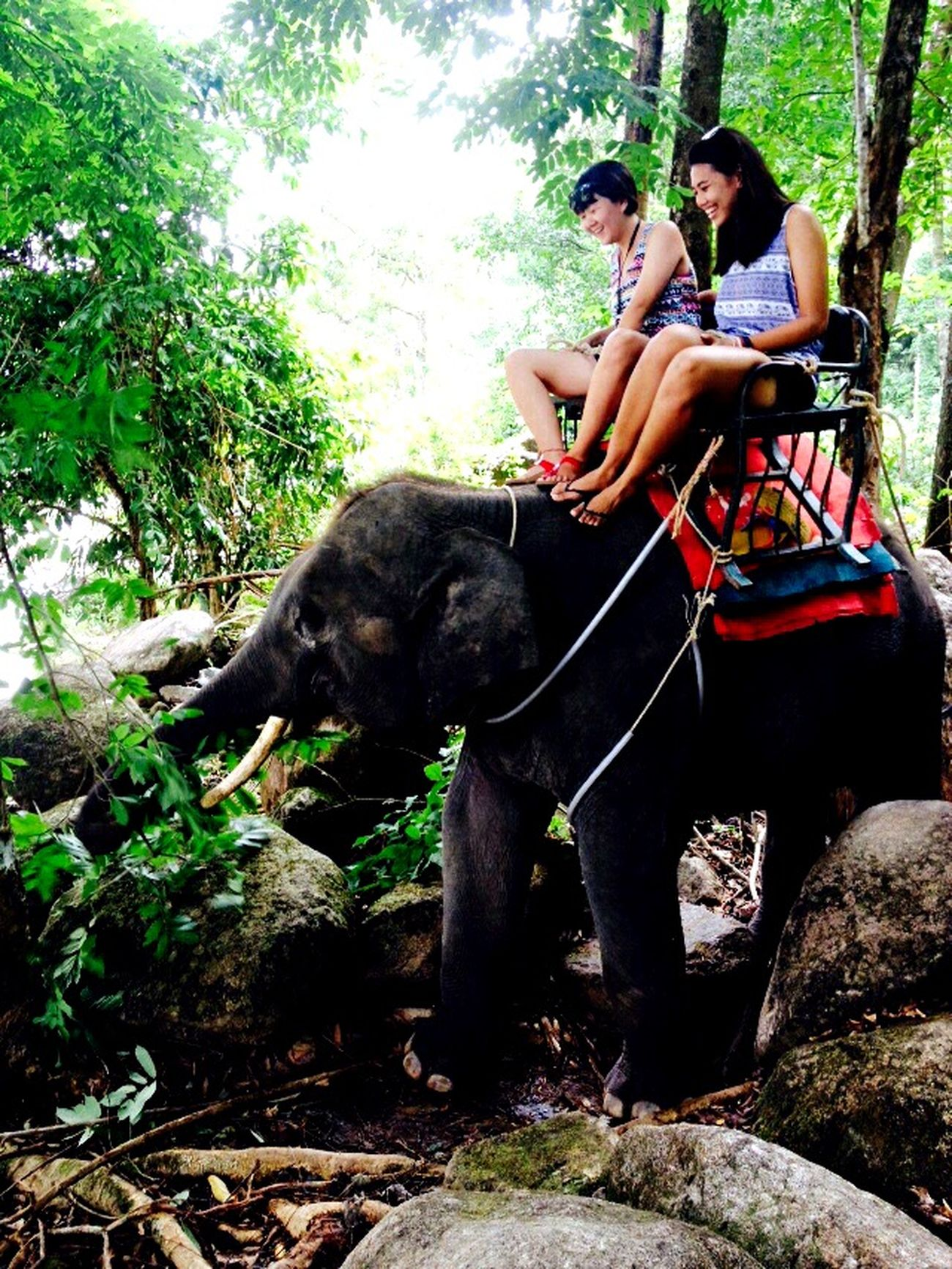 elephant trekking! Messy the baby! First and last time to ride on an elephant, my fav animal. feels bad to sit on them 😭 Elephant Krabi Travel Thailand Sunny Day Elephant Trekking Traveling Travel Photography