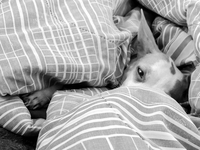 Animal Themes Close-up Comfortable Dog Dogs Domestic Animals Magazhu No People Pets Relaxation Resting Showcase August Yelapa