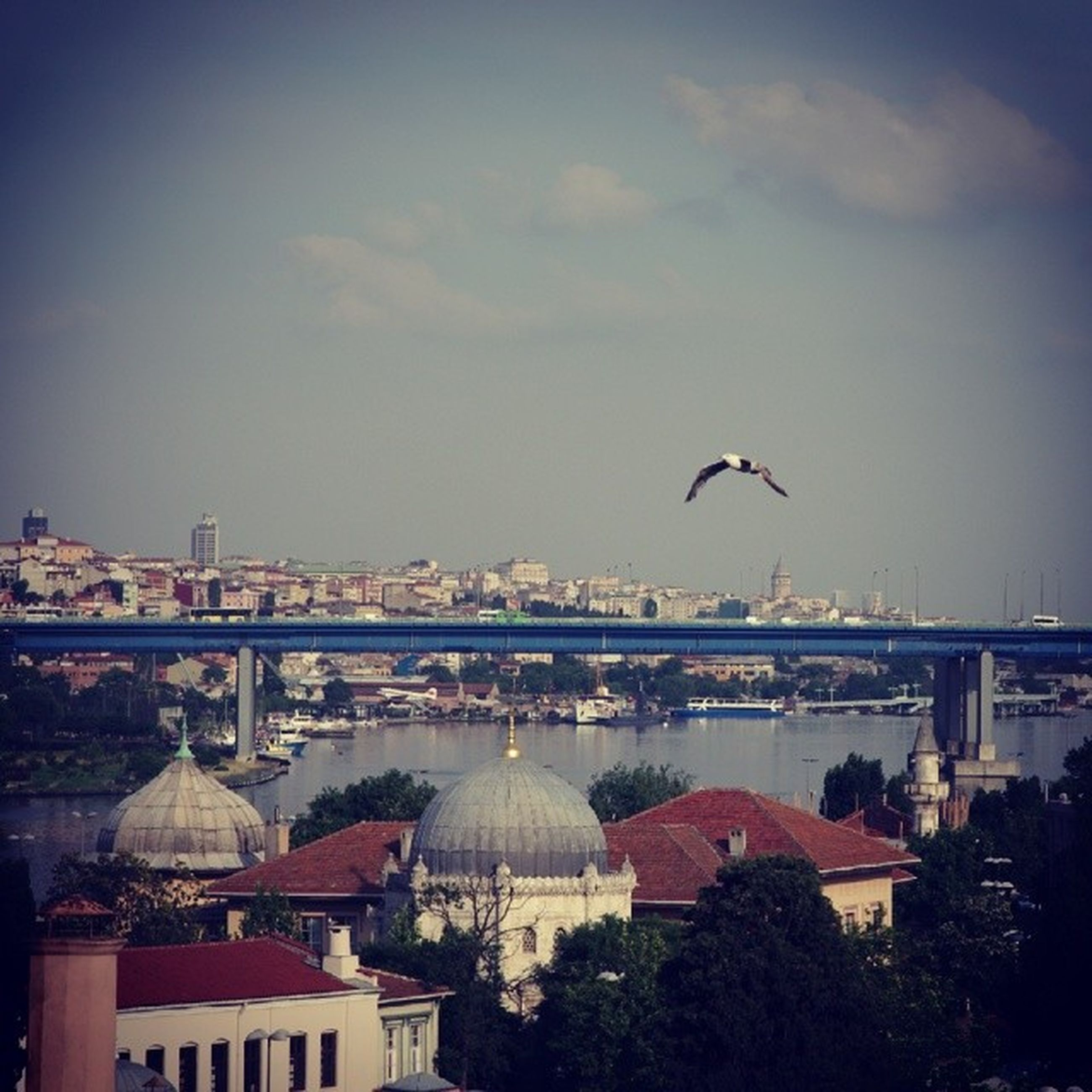 architecture, bird, built structure, building exterior, flying, animal themes, animals in the wild, sky, city, water, cityscape, wildlife, one animal, seagull, river, mid-air, bridge - man made structure, outdoors, spread wings, sea