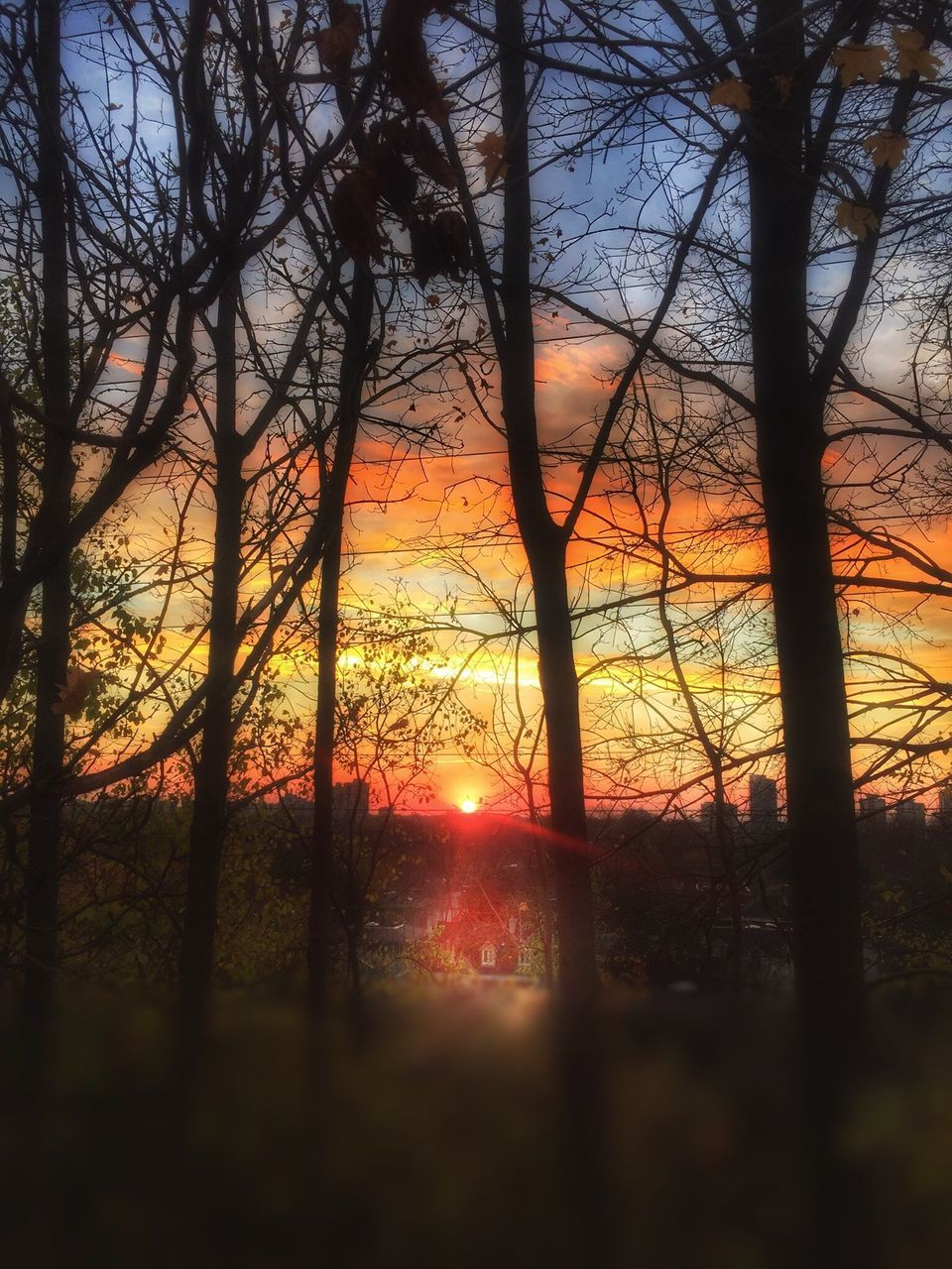 sunset, tree, tranquility, sun, bare tree, nature, tree trunk, beauty in nature, tranquil scene, no people, scenics, silhouette, sky, branch, forest, sunlight, landscape, outdoors, forest fire, tree area, day