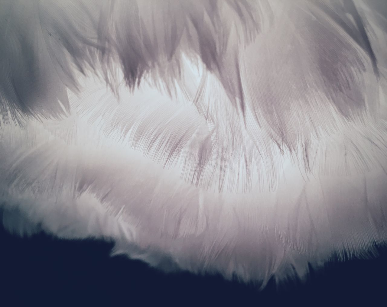 It's so fluffy!!! P332 Softness Close-up Fluffy White Selective Focus Beauty In Nature Nature Freshness Extreme Close-up Fragility Tranquility Smooth Feathers Feather  Light Source Full Frame Monochrome