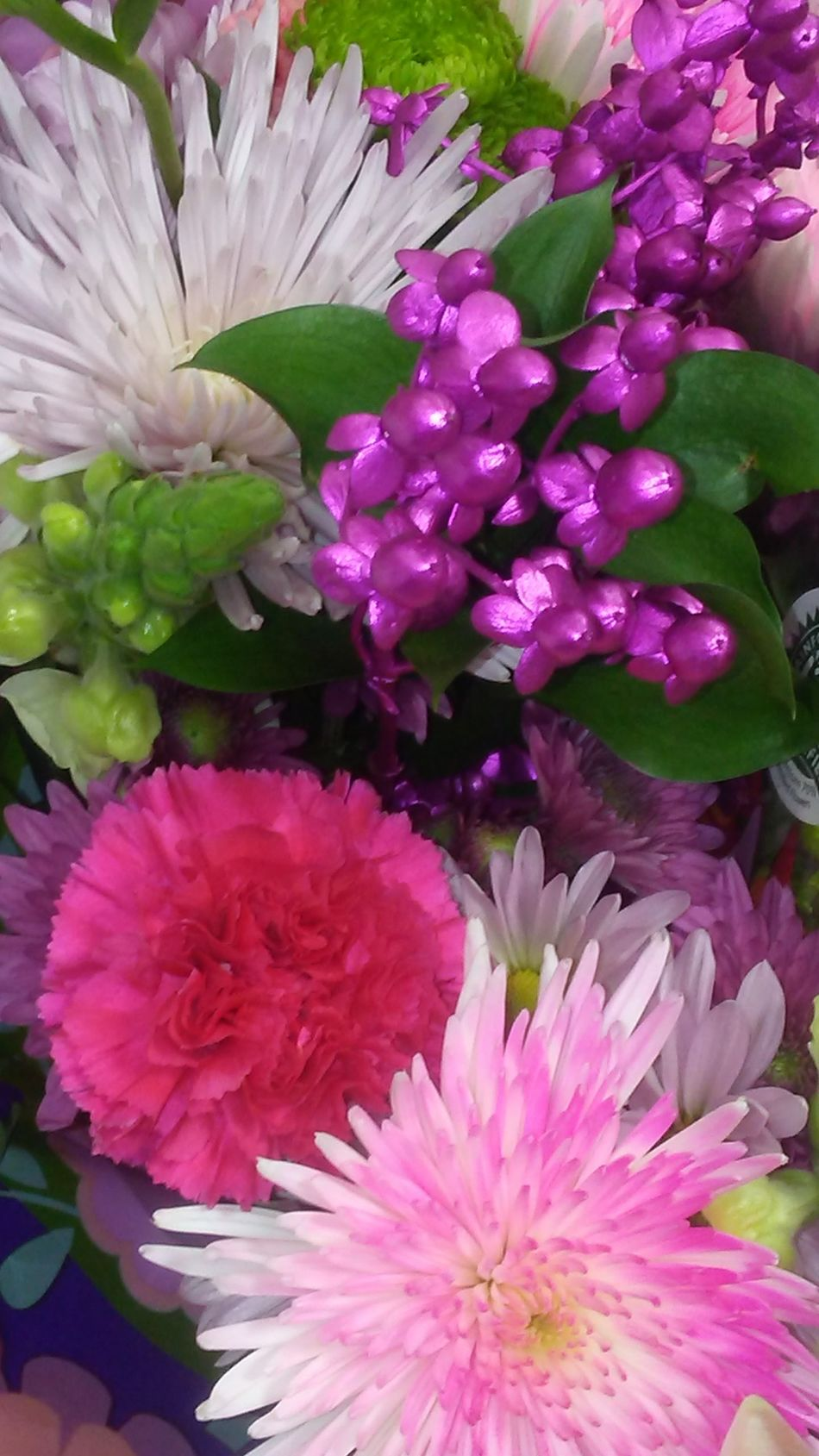 Flower Beauty In Nature Petal Purple Flower Head Pink Color Blooming Backgrounds Close-up Mn