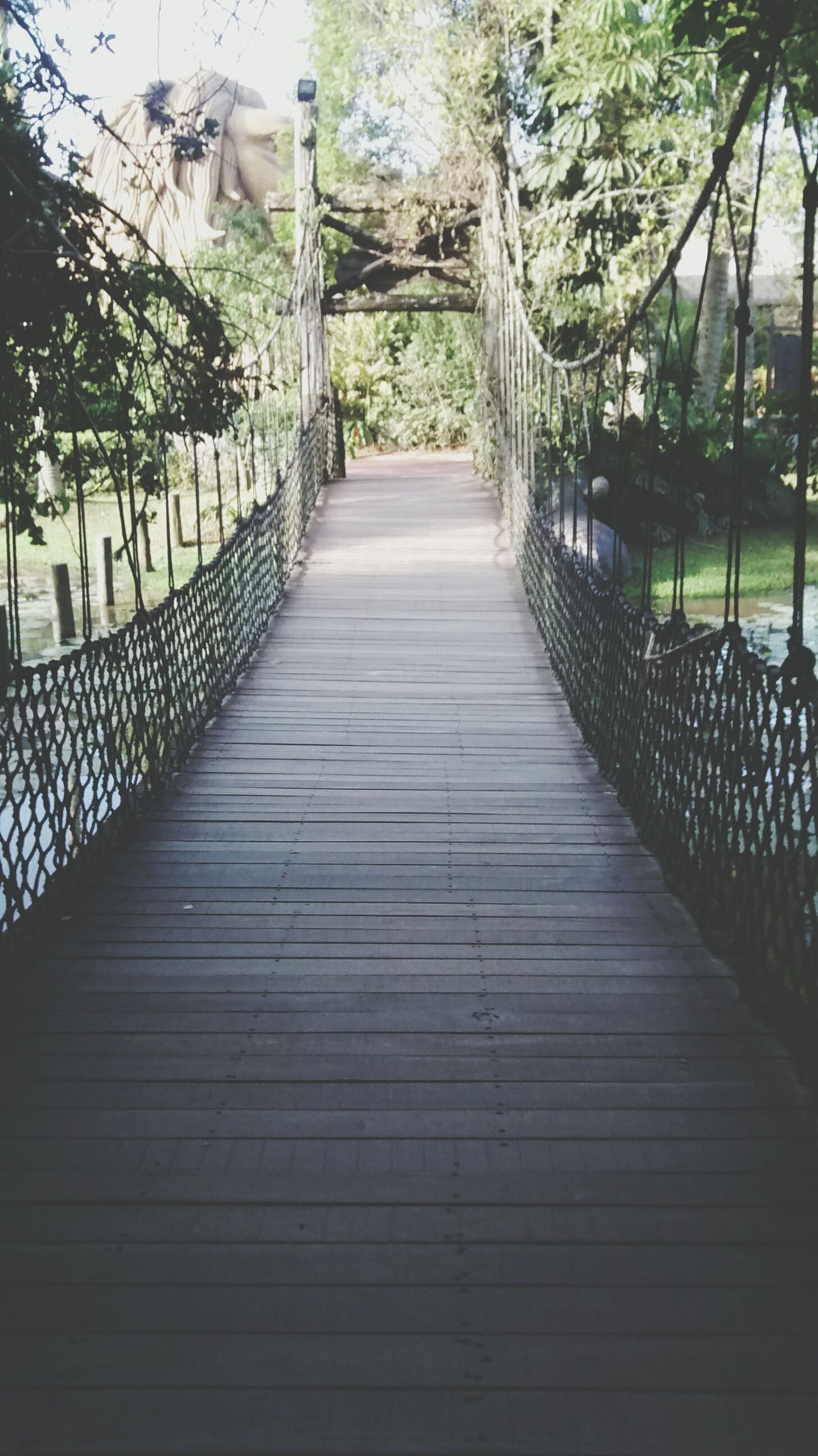 tree, railing, the way forward, built structure, architecture, fence, steps, footbridge, wood - material, sunlight, metal, diminishing perspective, growth, no people, day, gate, outdoors, building exterior, park - man made space, nature
