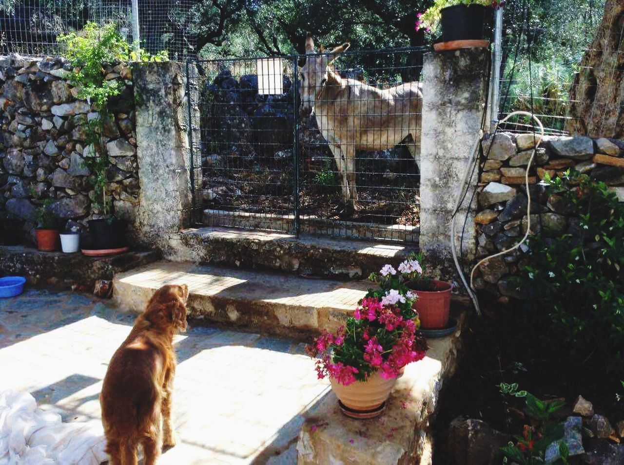 Found this dude outside my house Front Or Back Yard GREECE ♥♥ Kalamata First Eyeem Photo