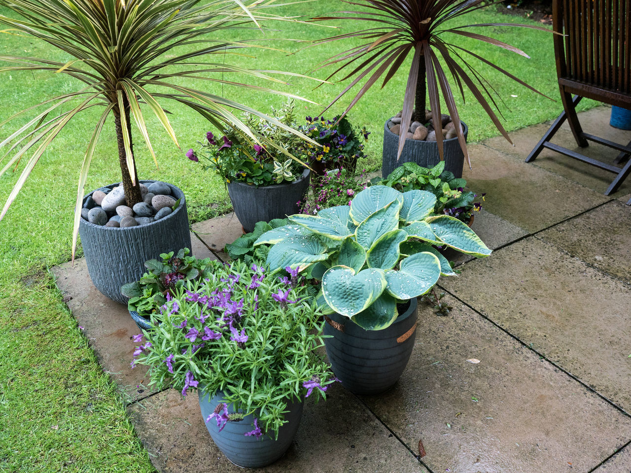 Rain Beauty In Nature Day Flower Freshness Green Color Growth High Angle View Nature No People Outdoors Plant Potted Plant Rainy Days Welcome Welcome Rain