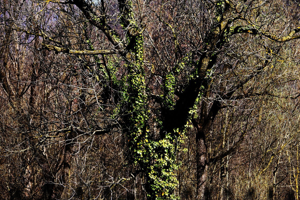 Ameno Town Close-up Day Forest Full Frame Growth Nature No People Outdoors Piemonte Tree Tree Trunk