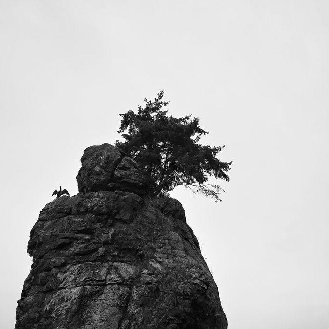 Stanley Park (Vancouver, Canada) Bird Dp23 Nature Rock Sigma Stanley Park Streetphotography