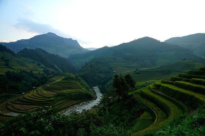 Mucangchai Farmlandscape Travel Photography Mucangchai Vietnam October2015 Traveling On The Farm