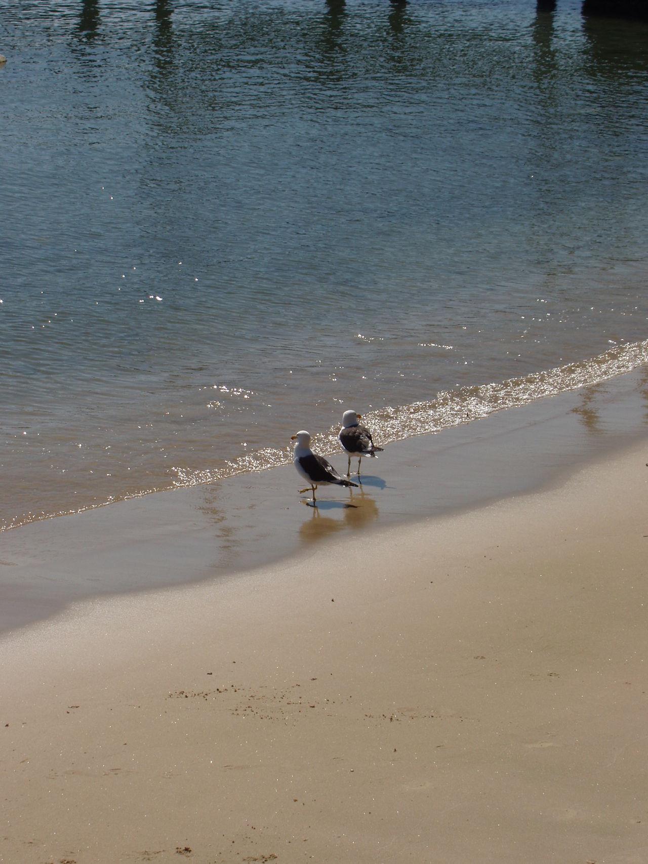 Beach Buzios Buziosrj Sand Seagull Seagull Serenity Seagulls And Sea Travel Walking Water Learn & Shoot: Leading Lines Learn & Shoot: Simplicity Litoralbrasileiro Litoralcarioca Buzios-RJ ExploringBrazil Two Is Better Than One
