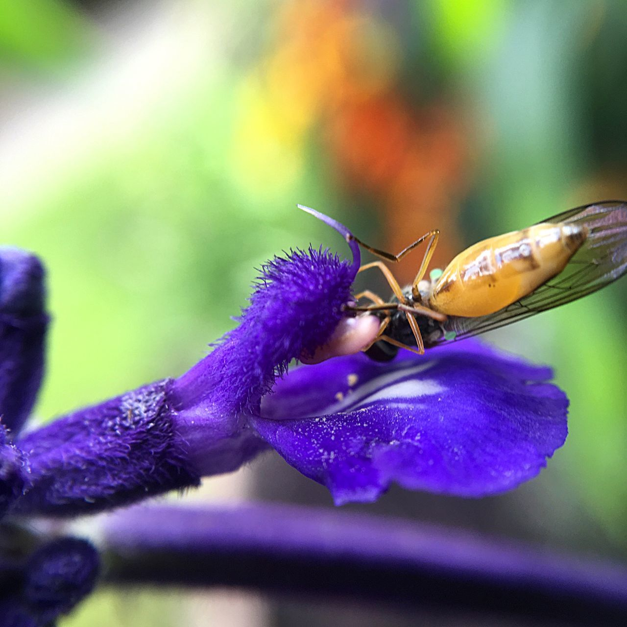 flower, nature, insect, beauty in nature, close-up, animals in the wild, animal themes, plant, one animal, no people, purple, fragility, petal, outdoors, freshness, focus on foreground, growth, day, flower head