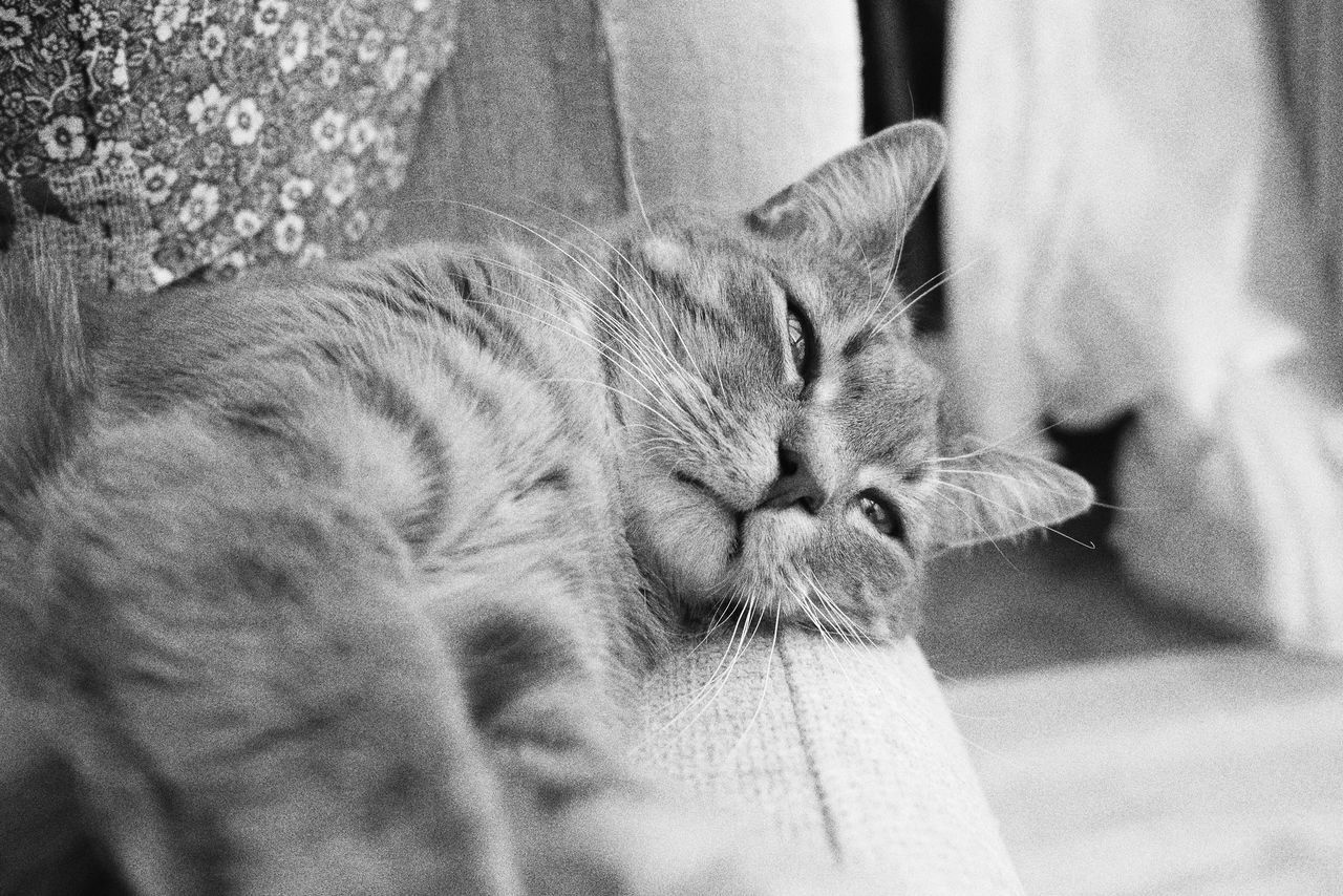Domestic Cat Animal Themes Pets Domestic Animals Mammal Feline One Animal Whisker No People Day Close-up Sleepy Tranquil Scene Monochrome Full Frame Indoors  Portrait Tranquility Cat Indoors