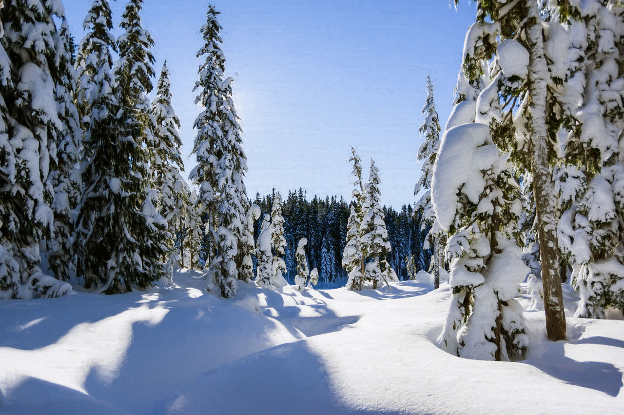 Beauty In Nature Cold Temperature Day Forest Landscape Nature No People Outdoors Paradise Meadows Scenics Sky Snow Strathcona Provincial Park Tranquility Tree Winter