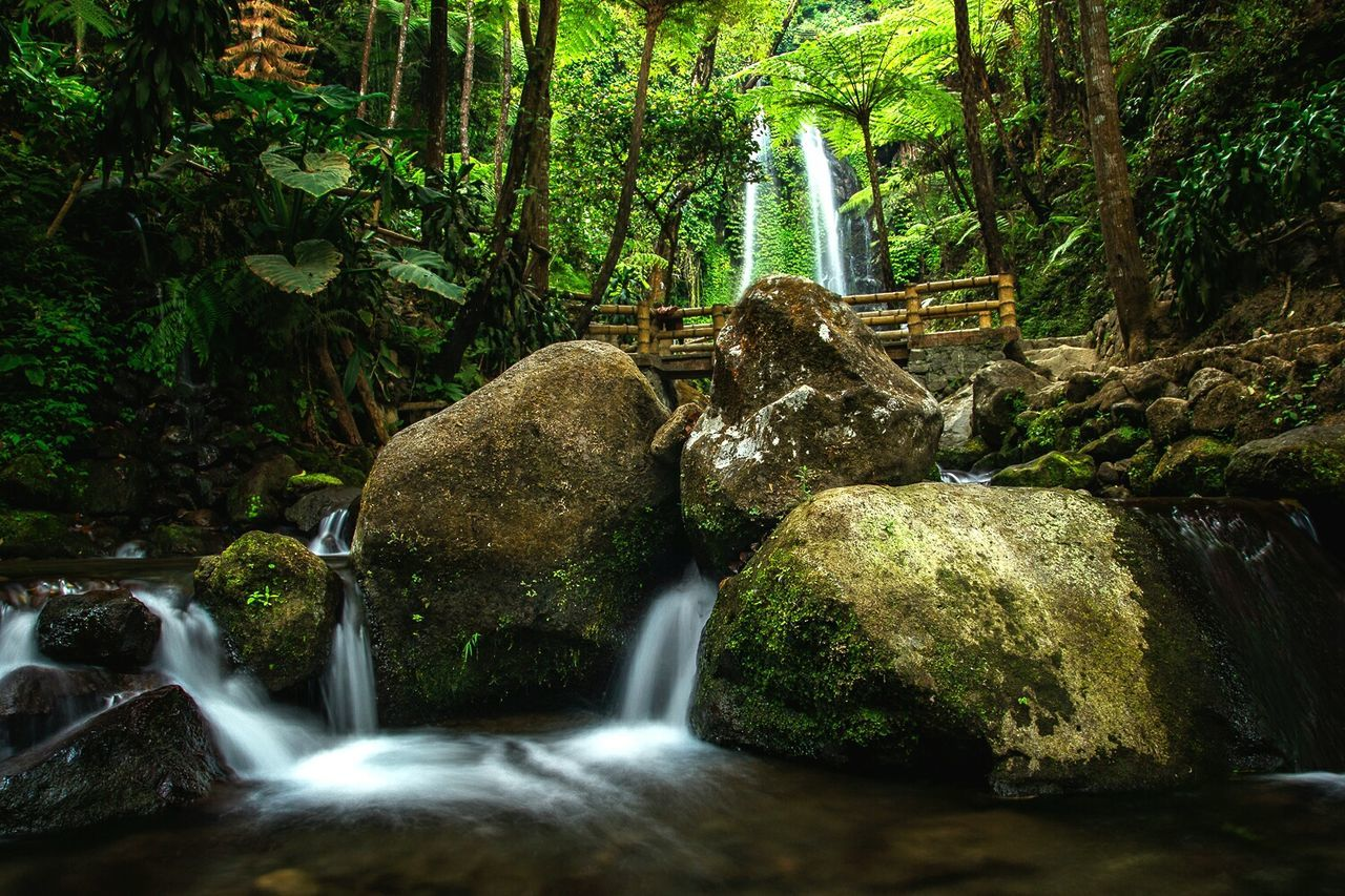 A beautiful waterfall from indonesia, this amazing waterfall is hiding inside of the mountain,we yave to walk around 500 meters inside the village Nature Beauty In Nature No People Tranquility Forest Tree Scenics Backgrounds Outdoors Close-up Water Day Landscape INDONESIA Photography Nature Mountain Cliff