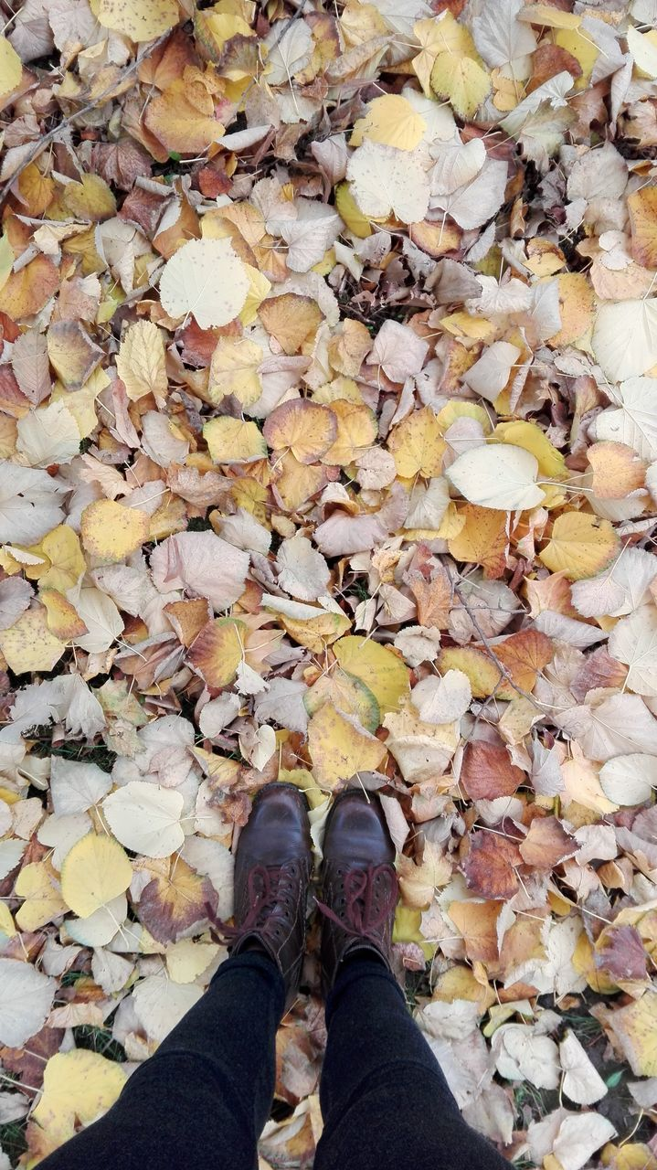 autumn, leaf, change, leaves, shoe, low section, dry, human leg, standing, fallen, day, nature, personal perspective, abundance, outdoors, real people, high angle view, one person, human body part, beauty in nature, maple leaf, close-up, people