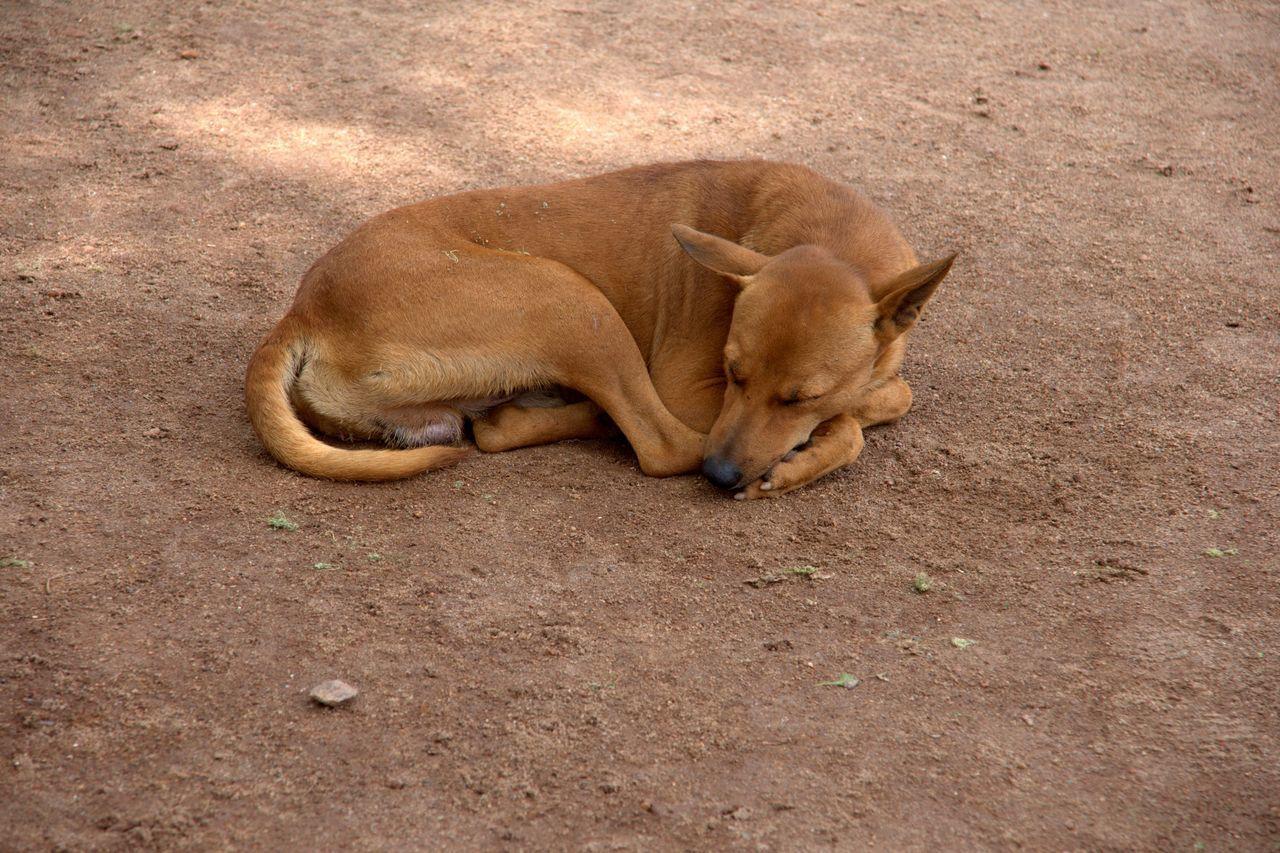 Sleeping lonely dog near Kochi, India Abandoned Animals Animal Animal Themes Dog India Kerala Kochi Lying Down No People One Animal Relaxing Sand