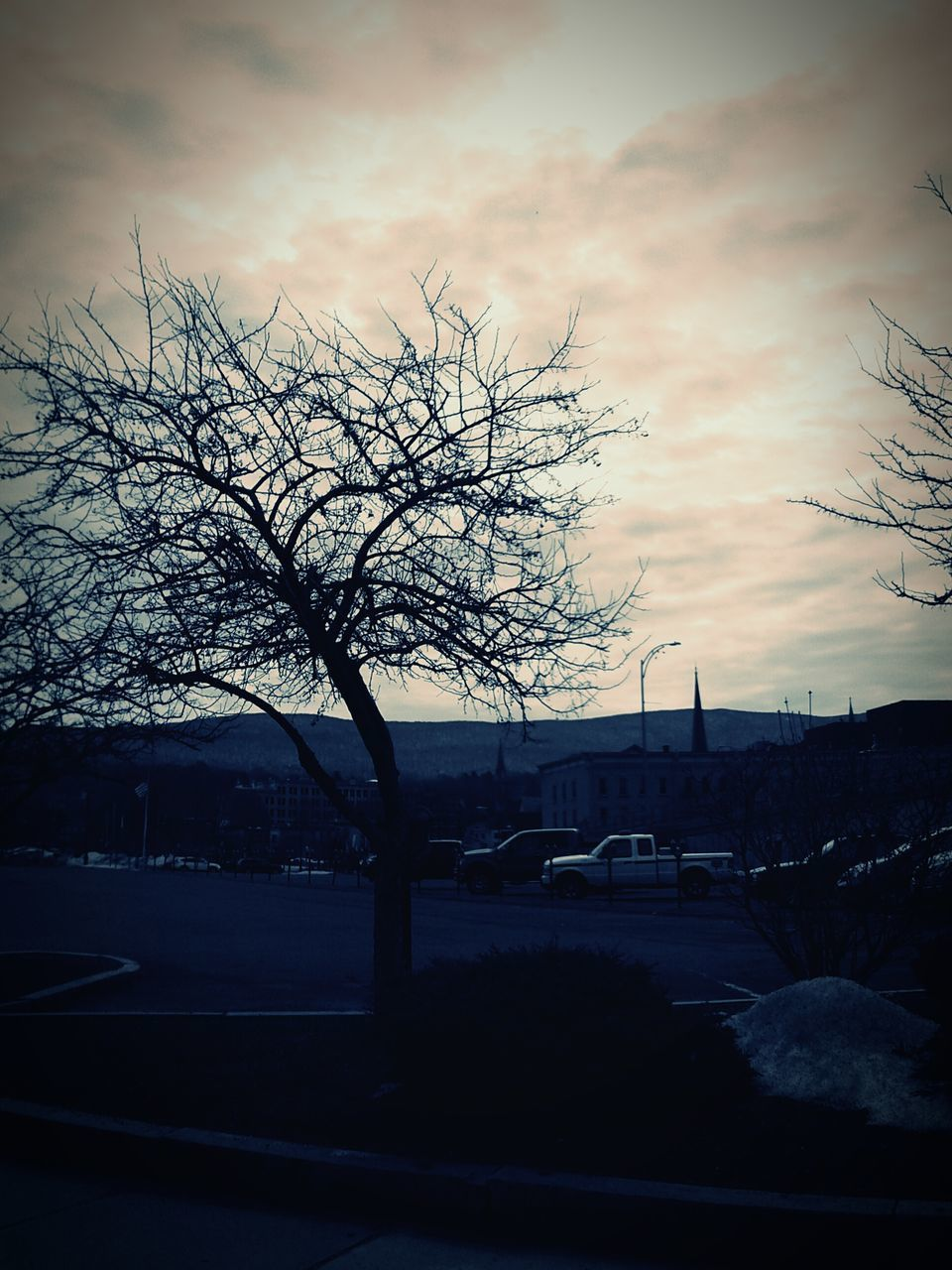 tree, bare tree, car, road, no people, sky, transportation, outdoors, land vehicle, branch, nature, day, sunset, beauty in nature