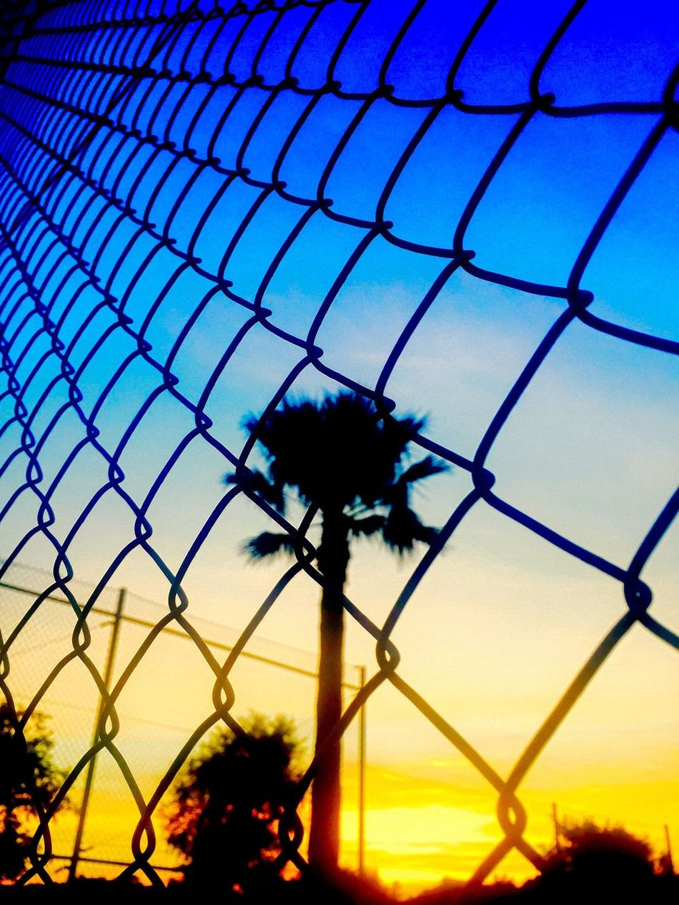 Mesh Mesh Wire Fence Atmospheric Sky Sunset Wire Fence Wire Mesh Fence Palm Tree Holiday Perspective Atmosphere