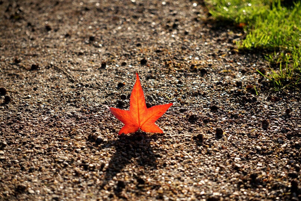 Beautiful stock photos of leaf, Backlit, Day, Elevated View, Leaf
