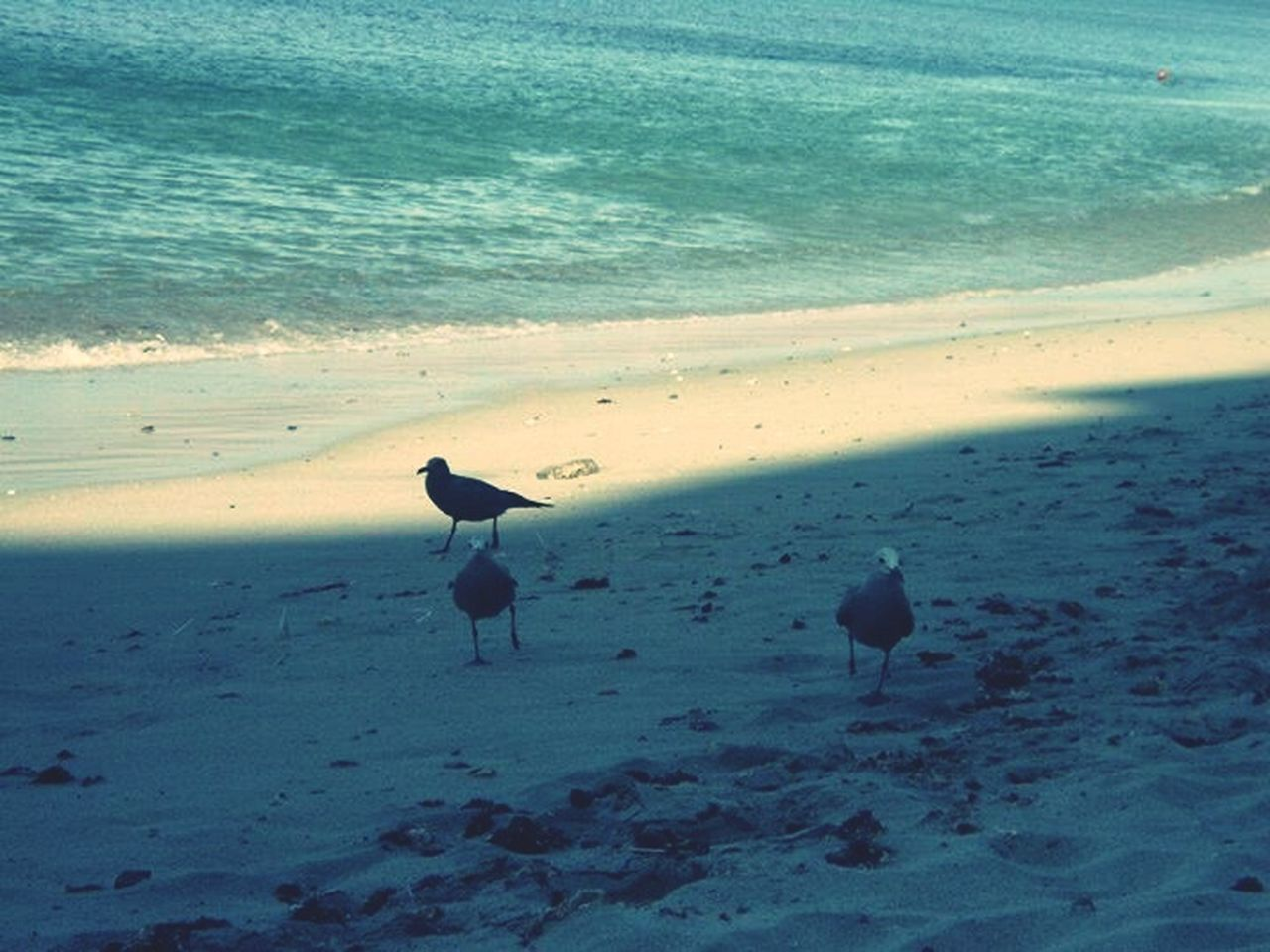 beach, sea, sand, water, nature, shore, animal themes, bird, animals in the wild, wave, beauty in nature, animal wildlife, no people, outdoors, day, scenics, horizon over water, perching