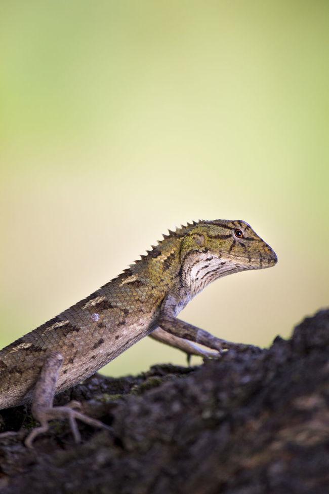Climbing Lizard Lizard Lizard Nature Nature Nature Photography 👣 Rainy Days☔ Rainy Season Wildlife & Nature Wildlife And Nature Wildlife Photography Wildlifephotography