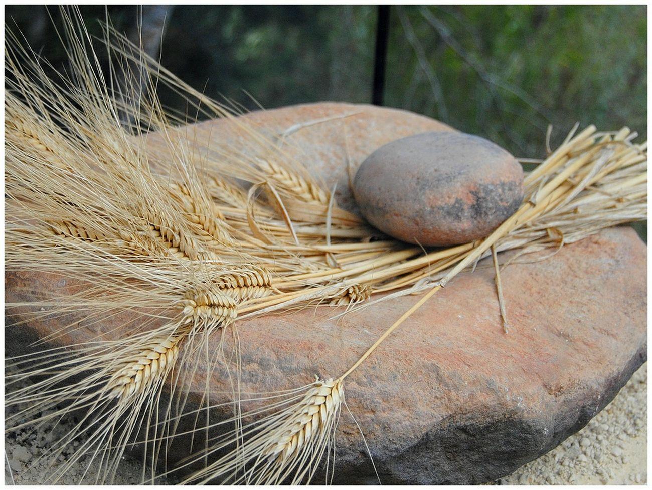 Taking Photos Meze Le Parc Des Dinosaures France Meule BLE Wheat Eyeemphotography Millstone Prehistoric
