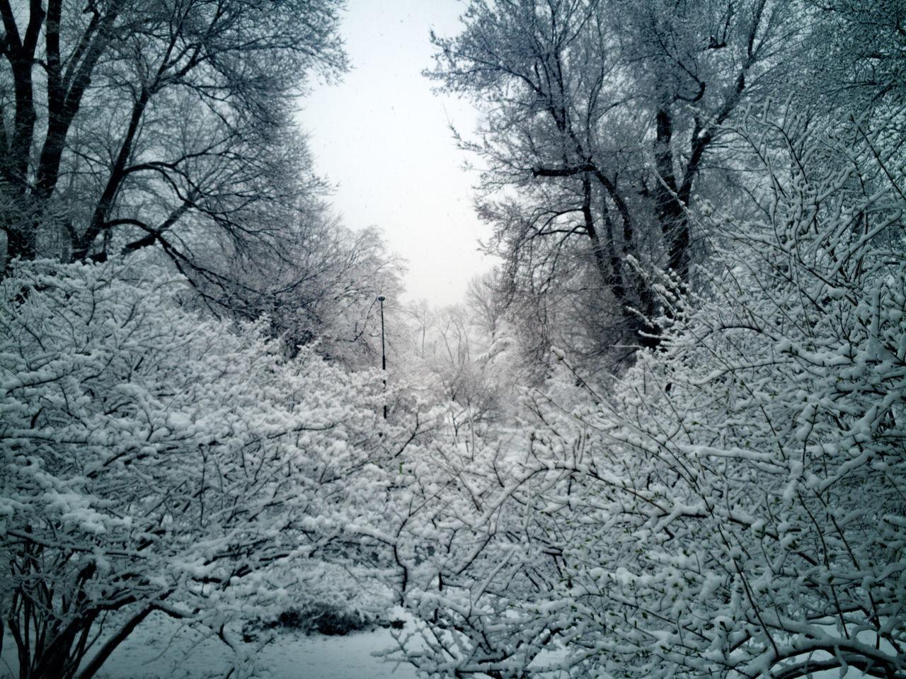 Rahim RahimNoel New York Vivid Manhattan Calm Mood Non-urban Scene No People Beautiful Beauty In Nature Tree Darkness And Light Black & White Snow ❄ Blue ❤