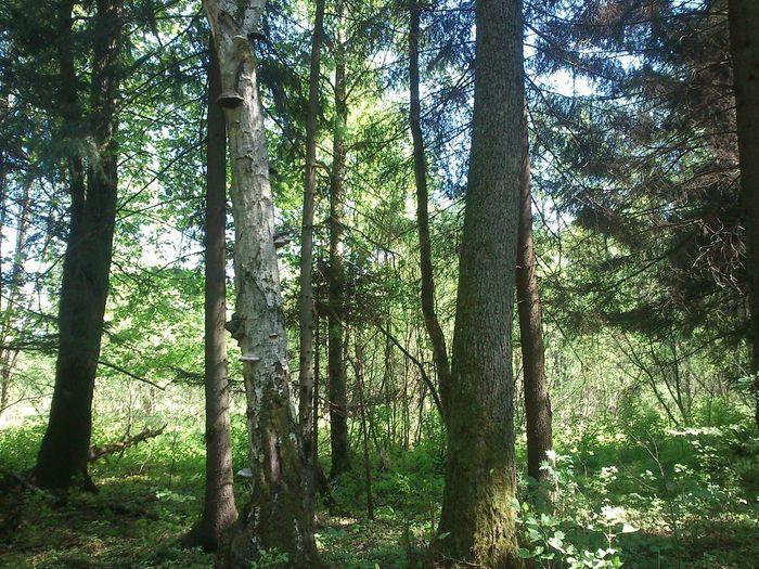 Bialowieski National Park
