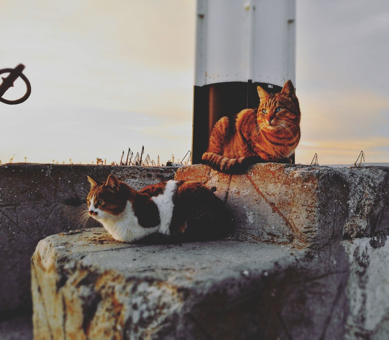 Animal Themes No People Sunset Animals In The Wild Mammal Day Nature Sky Water Outdoors Varna Bulgaria Varna Bułgaria Cats Sea. Sea port Varna