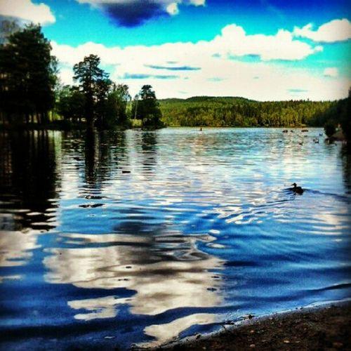 Oslo Sognsvann Lake Norway Landscape Water