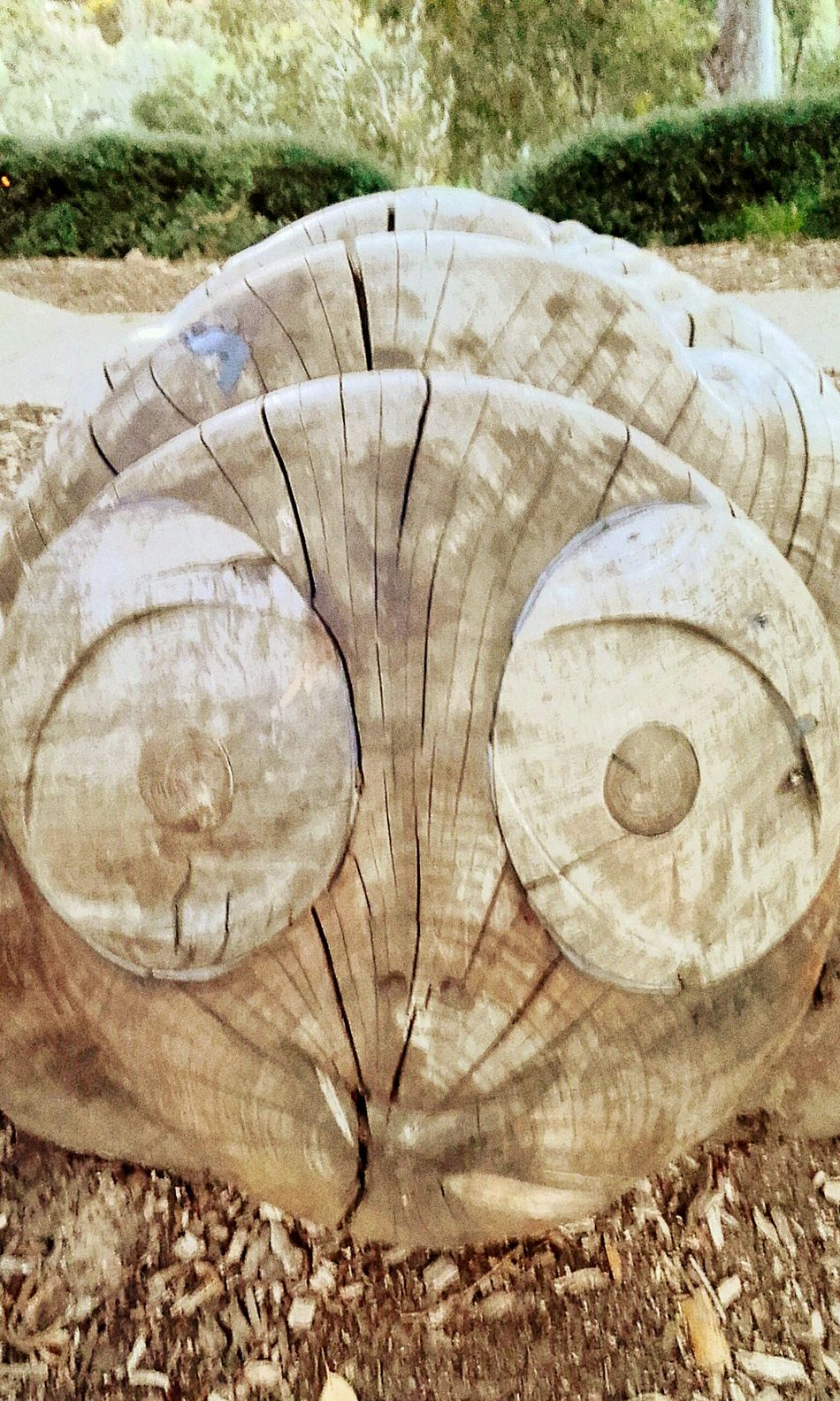 Timber Log Wood - Material Close-up Treen Art Face Wooden Sculpture Urban Art UrbanART Woodcarved Woodcarving Faces Carved In Wood Carved Wood Carved Wooden Figure Carved Wooden Figures Wood WoodArt Wooden Sculpure Woodcarvings Wood Art Street Photography Streetphotography TreenArt