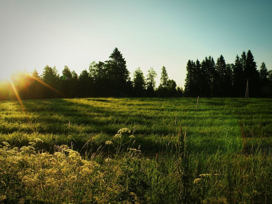 Sun Going Down Field Sunlight Sunbeam Clear Sky Lens Flare Finland Last Sunshine Forest View Nature Countryside Outdoors Springtime