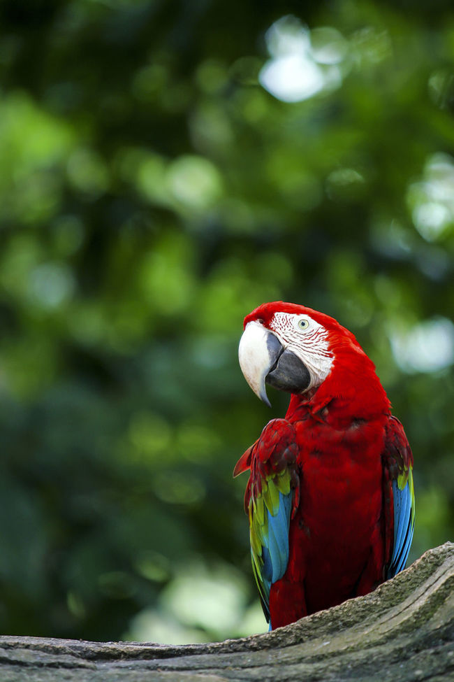 Beautiful Red-and-green macaw parrot. Bird Birds Blue Colorful Colors Colour Of Life Green Kakaktua Parrot Red