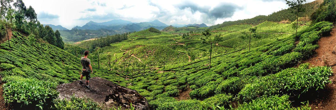 Munnar Beauty (India) Munnar Kerala Tee View Panorama