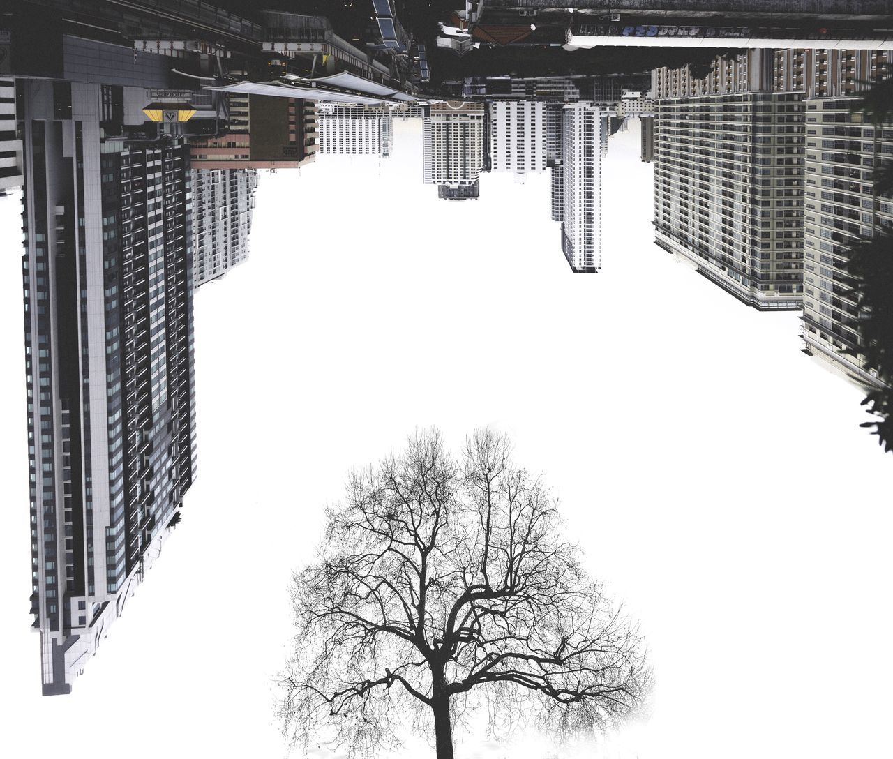 Digital Composite Image Of Bare Tree And Cityscape Against Clear Sky