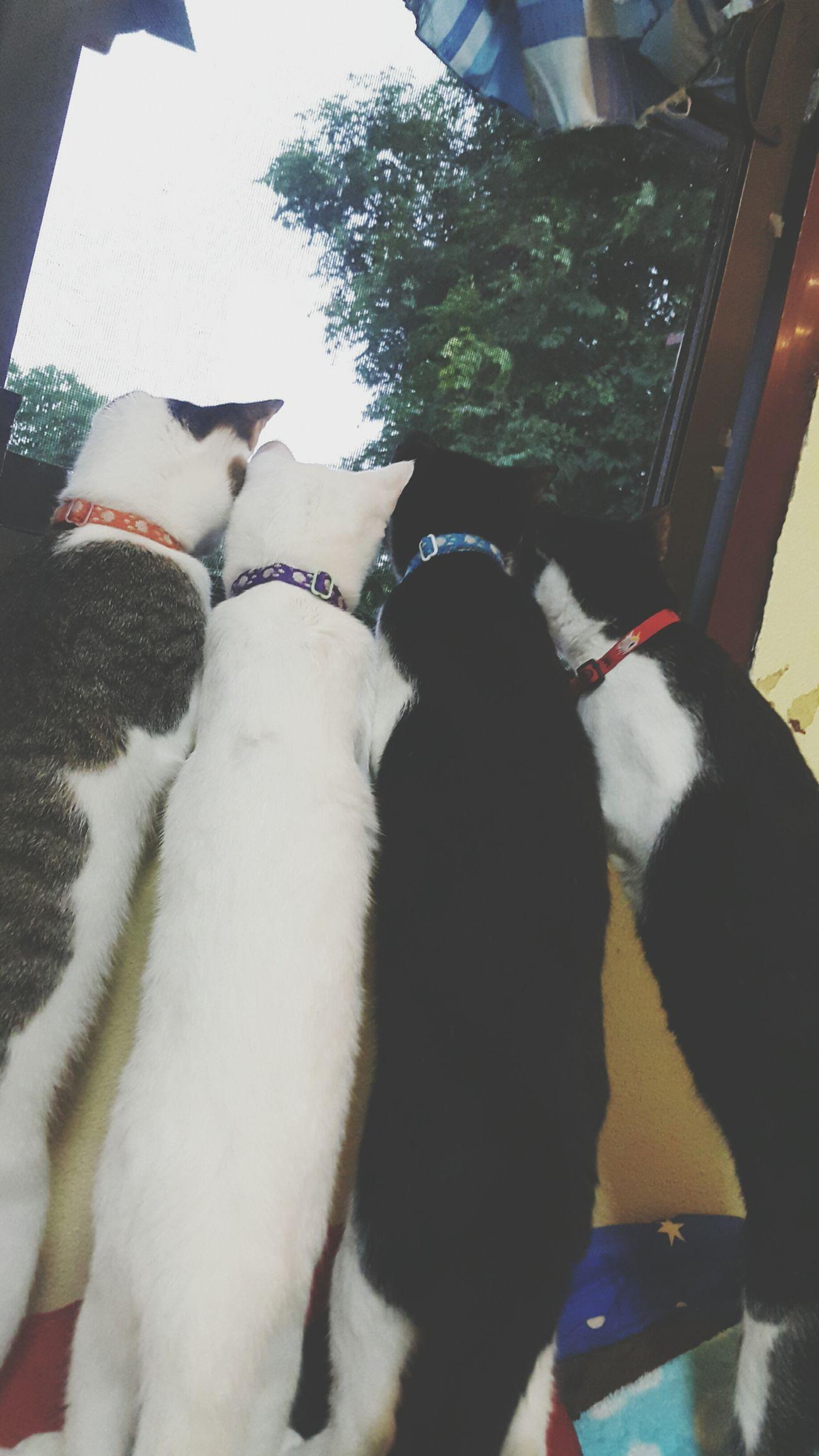 😚 Cat Cats Cat♡ Cat Lovers Catsofinstagram Cats Of EyeEm Cat Watching Mycat My Cats
