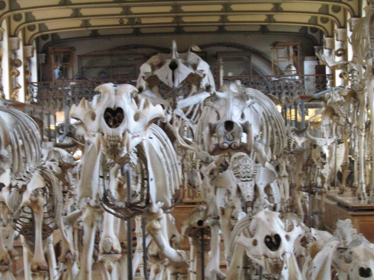 Galerie évolution Museum Paris Squelette Tourism