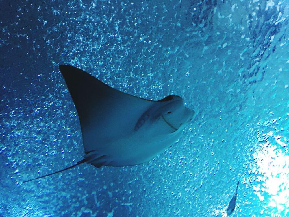 когалым океанариум рыба Скат скат улыбается 😊