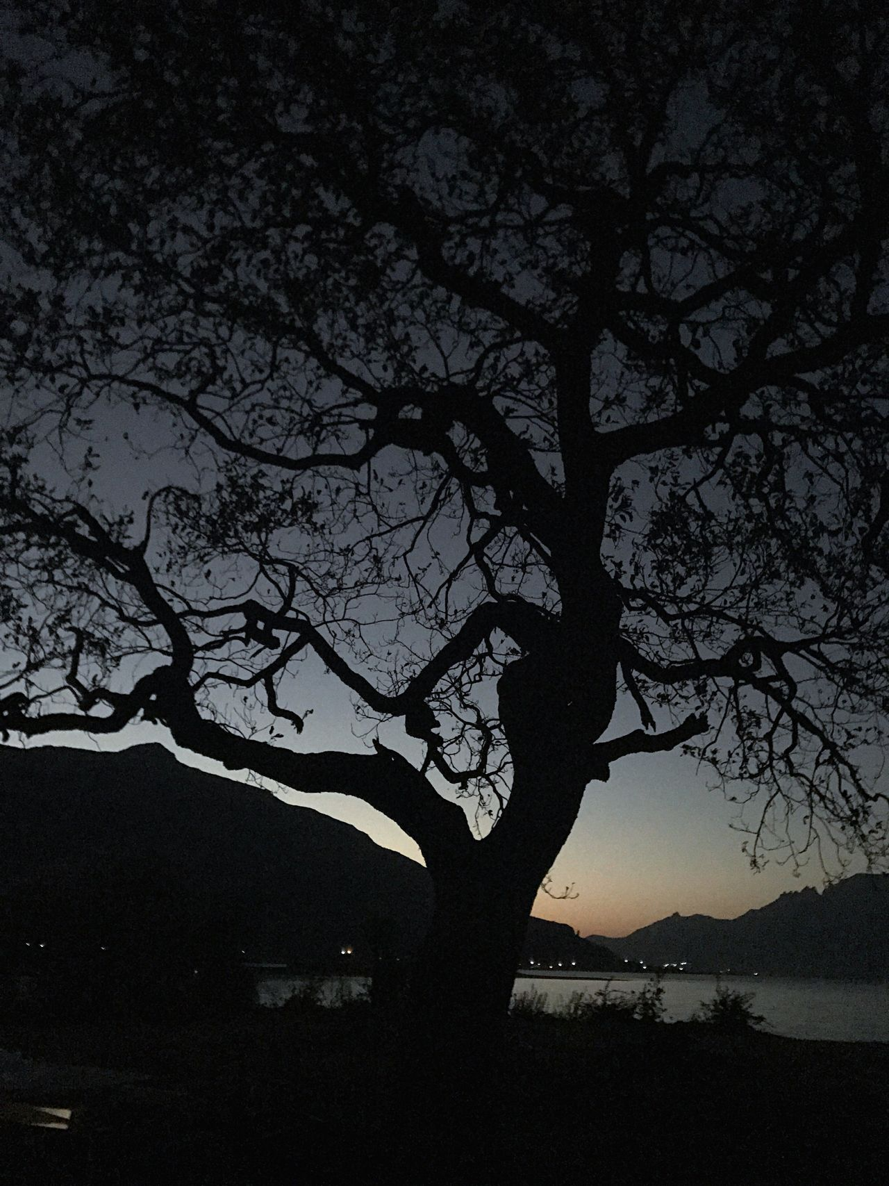 Tree Silhouette Beauty In Nature Nature Branch Scenics Bare Tree Sky Outdoors Landscape Sunrise Morning Light Morning Sky Gorgeous Malshejghat Incredible India Incredible Condé Nast Travel Travel Photography