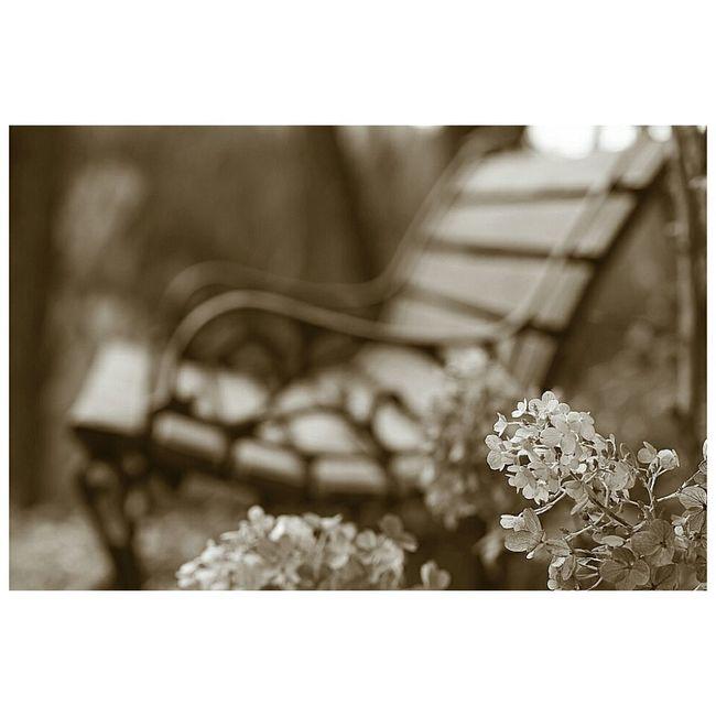 素枯れ紫陽花 EyeEm Nature Lover EyeEm Flower YAMAGATA 蔵王ペンション村