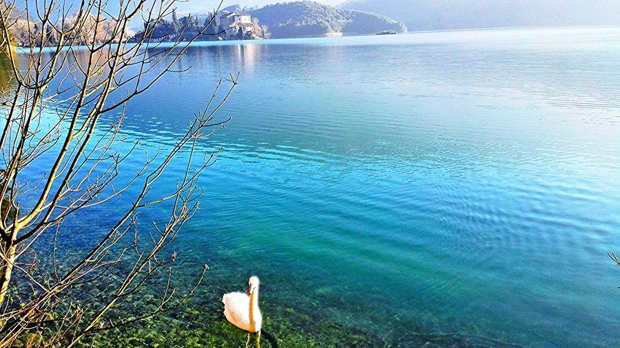 Lago Di Garda Italy Lake Nature Swan EyeEm The Week Of Eyeem Byebye 👋📷🎩