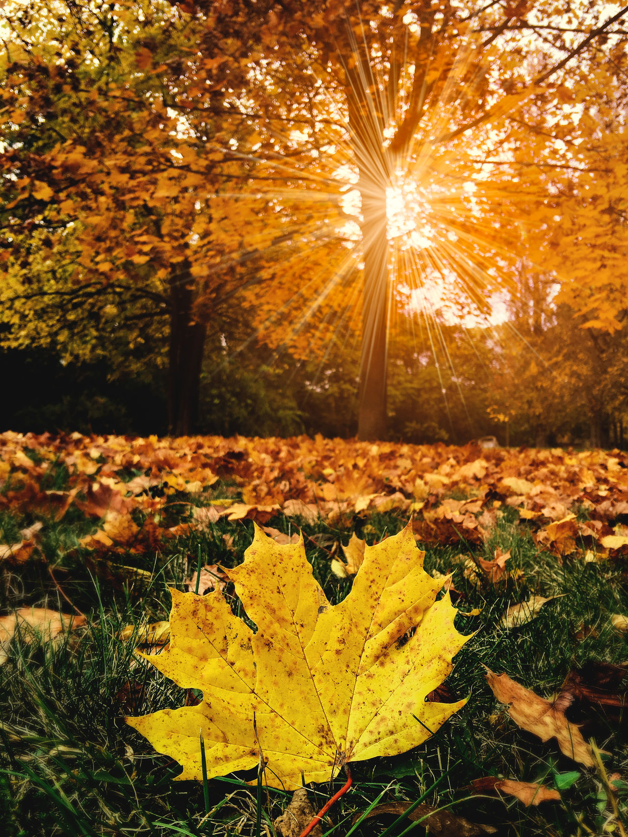 Autumn Autumn Autumn Autumn Collection Autumn Colors Beauty In Nature Color Colors Day Nature No People Outdoors Photo Photography Photooftheday Sunlight Sunset First Eyeem Photo