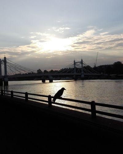 London Betterseapark Crow