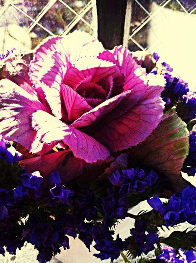 Flowers Cafe Latte Purple Purple Flower