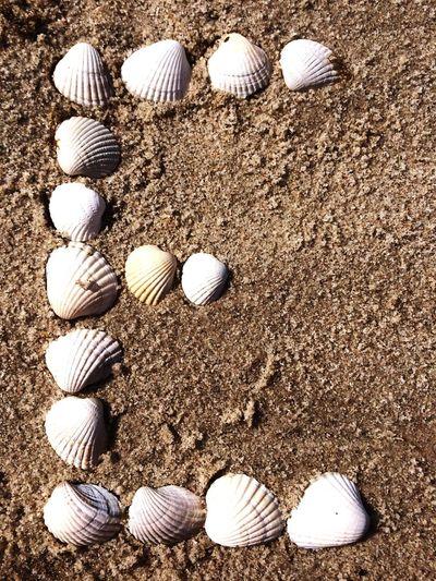 Letter E EyeEm Shells Alphabet With Shells