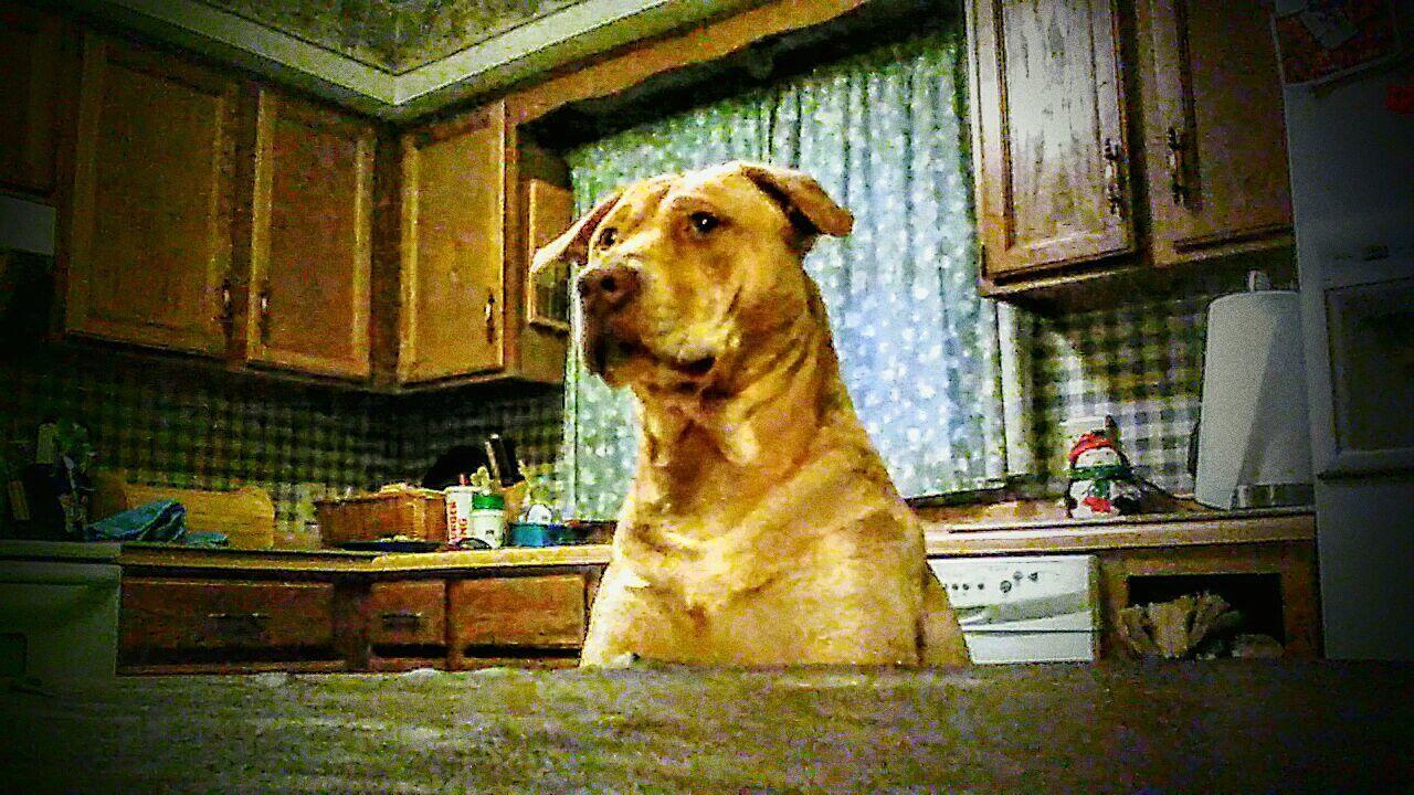 Taking Photos Hanging Out K9life Mansbestfriend Companion Dog Rednose Pitbull Enjoying Life