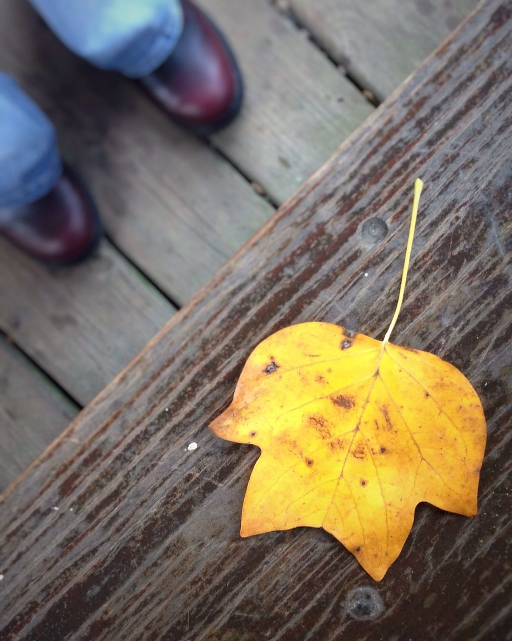 Low Section Of Person Standing By Yellow Leaf On Table
