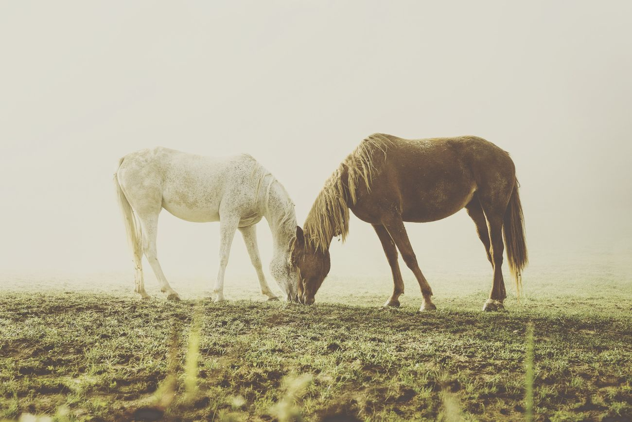 Photos That Will Restore Your Faith In Humanity Me and you, in the fog Romantic I Love Horses Foggy Morning Together Dreamy
