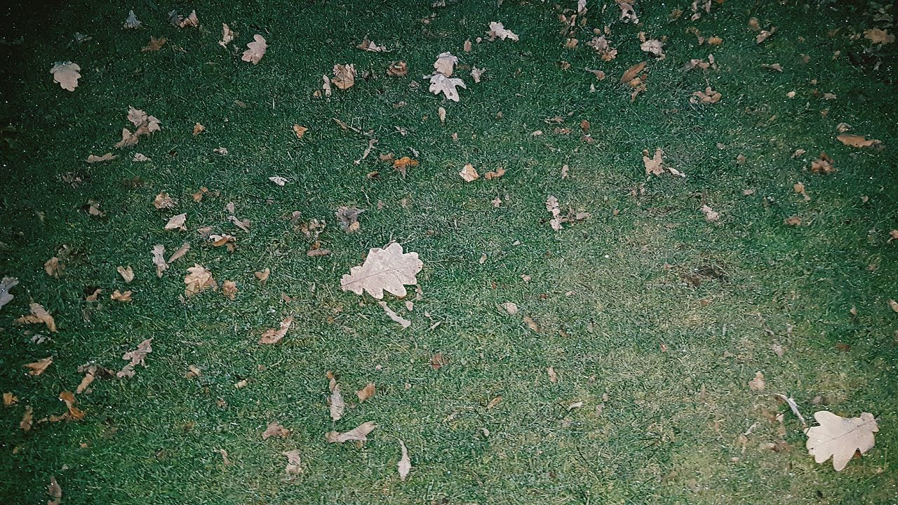 High Angle View No People Outdoors Nature Frost Leaves Oak Leaves Frosty Grass Torchlight