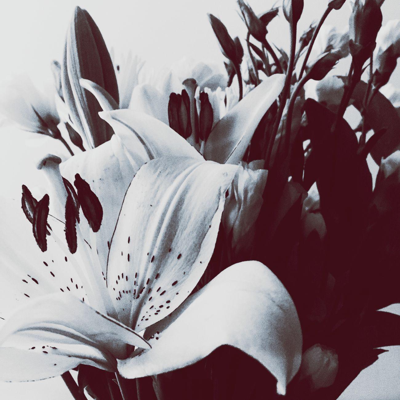 Morning + Light + Flowers Nature No People Plant Freshness