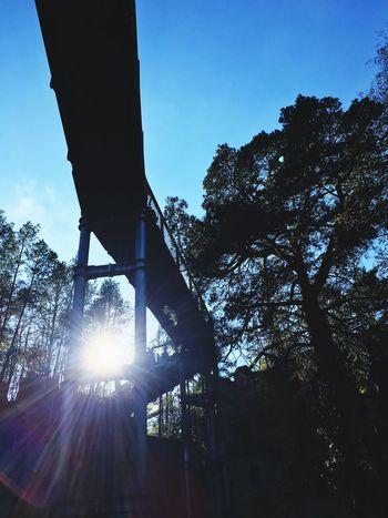 Tree Low Angle View Built Structure Architecture No People Outdoors Silhouette Sunlight Day Sky